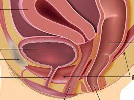 digital assessment pelvic floor muscle technique