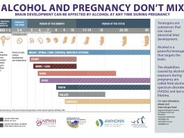Prevention of Alcohol-Exposed Pregnancies - Fetal Development Chart