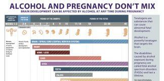 Prevention of Alcohol-Exposed Pregnancies - Fetal Development Chart